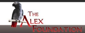 The Alex Foundation