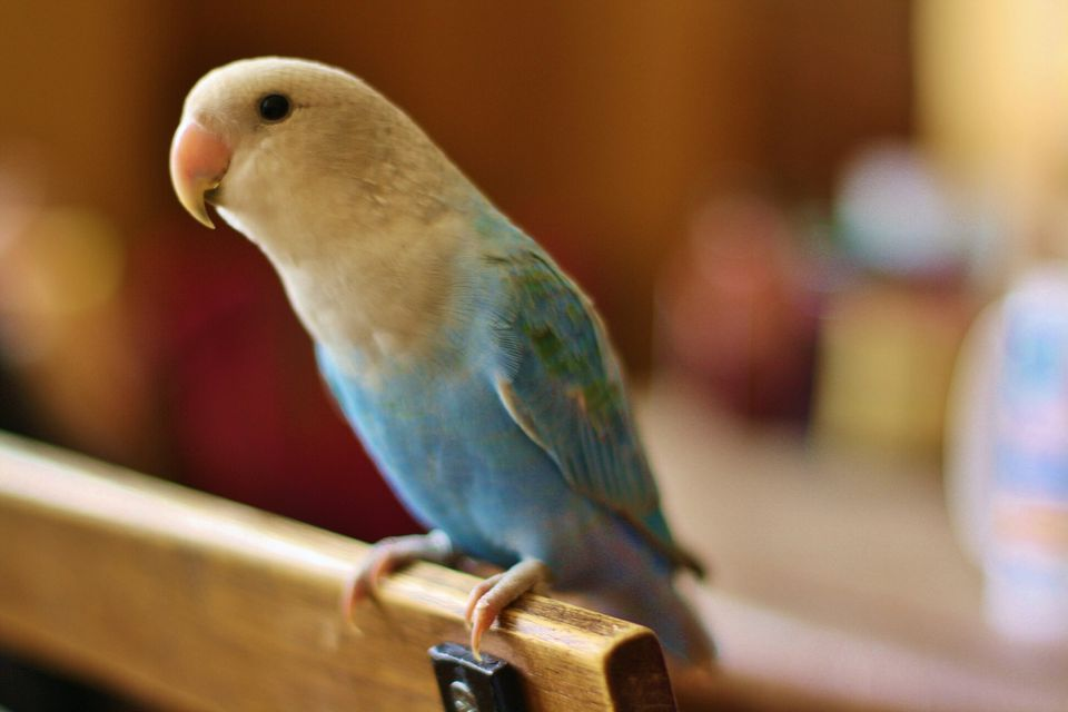 10 ways to determne if your bird needs to see a veterinarian.