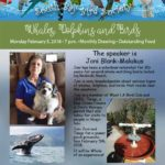 SBBS February Flyer - Whales, Dolphins and Birds